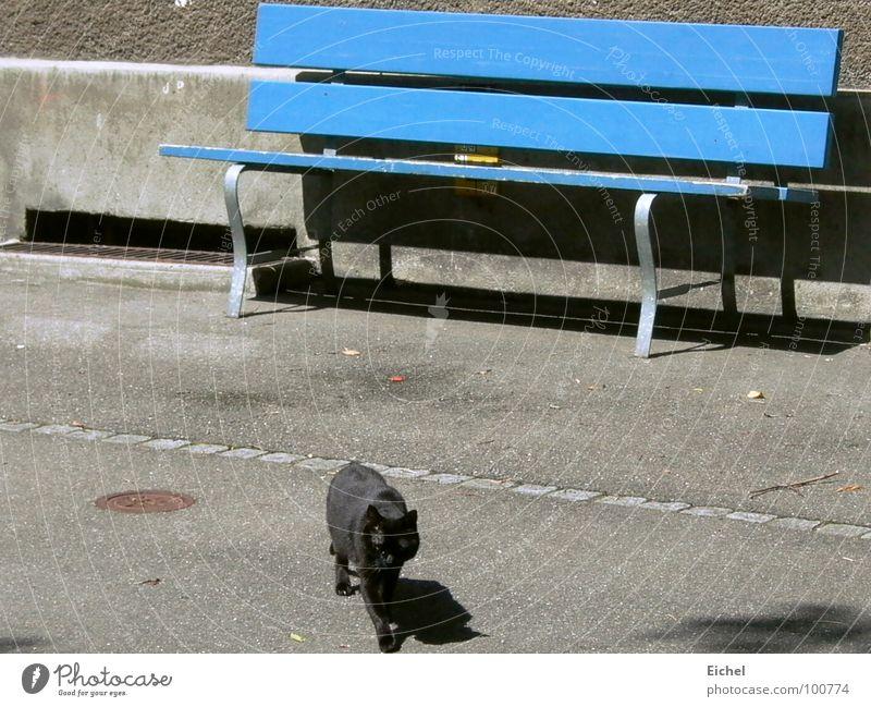 Katzenbank_2 Katze blau Wand laufen Bank Bürgersteig Säugetier Fensterladen
