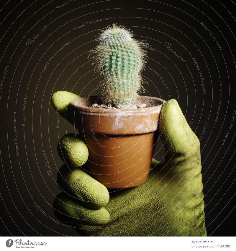 Ernte grün Freude schwarz lustig gefährlich Wüste Schmerz skurril Handschuhe Stachel stachelig Gärtner Zimmerpflanze Topfpflanze