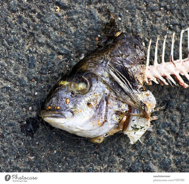 Fischkopp Wasser Sommer Tier Auge Tod lustig Lebensmittel dreckig Mund Ernährung Vergänglichkeit atmen obskur Ekel Scheune
