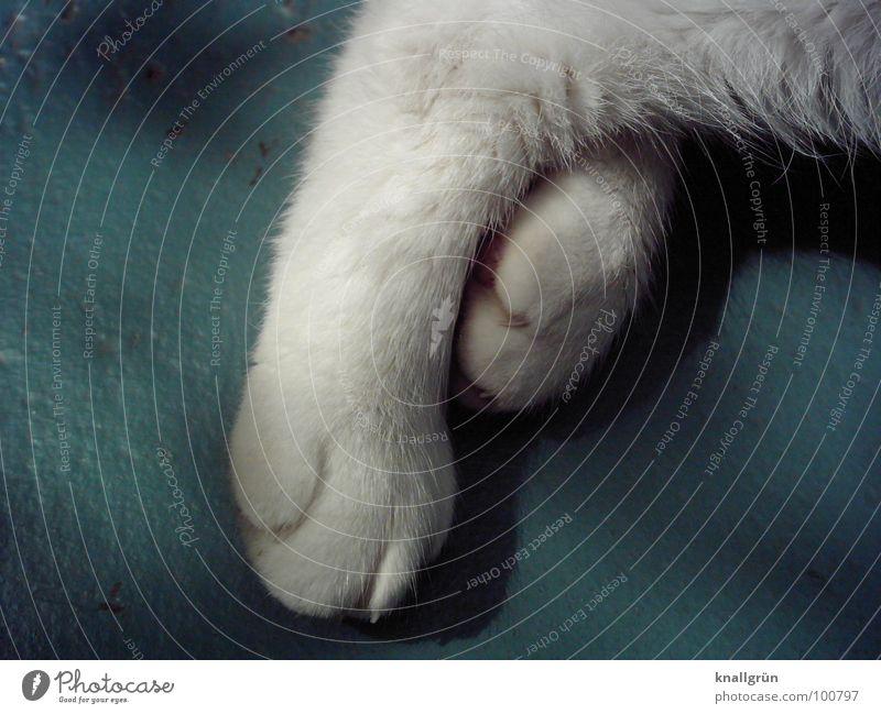 Knallbertos Füße Tier Fell weiß schlafen Erholung Pfote Krallen Katzenpfote Haustier Schlafplatz Säugetier Vertrauen Hauskatze Fuß Mußestunde Haare & Frisuren