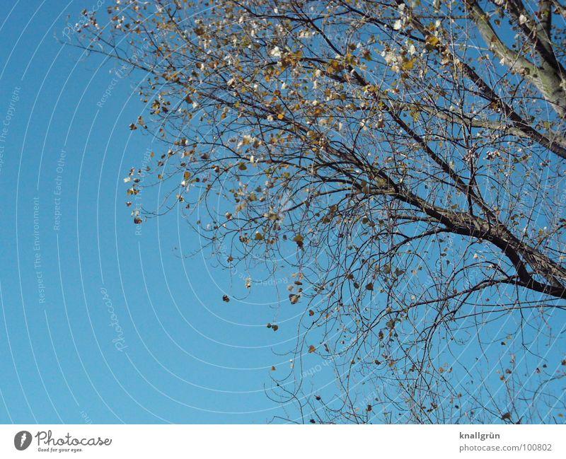 Vergänglichkeit Natur Himmel Baum blau Pflanze Herbst Ast Geäst Herbstbeginn