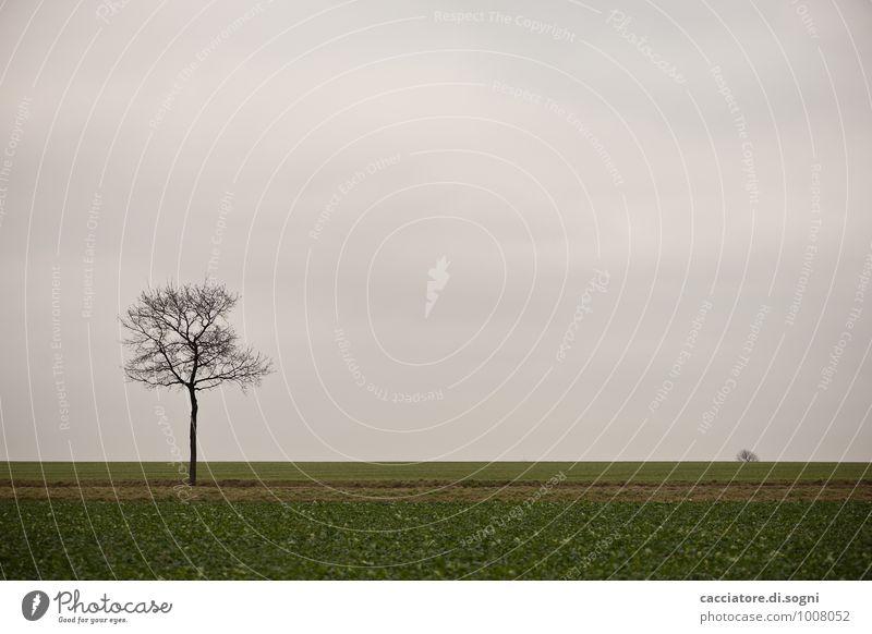 Etwas ausserhalb Umwelt Landschaft Himmel Herbst Baum Feld dunkel einfach trist grau grün schwarz ruhig Traurigkeit Müdigkeit Sehnsucht Fernweh Enttäuschung