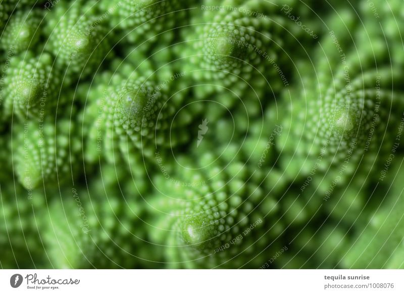 Fibonacci-Gemüse II Lebensmittel Ernährung Bioprodukte Vegetarische Ernährung Pflanze Nutzpflanze Romanesco frisch Gesundheit grün fraktal fibonacci Farbfoto