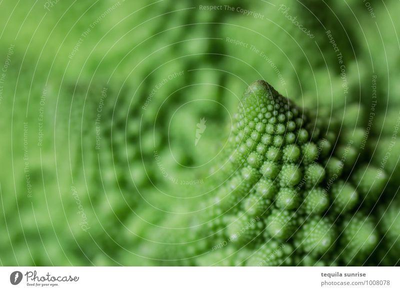 Fibonacci-Gemüse I Lebensmittel Ernährung Bioprodukte Vegetarische Ernährung Pflanze Nutzpflanze Romanesco frisch Gesundheit grün fraktal fibonacci Farbfoto