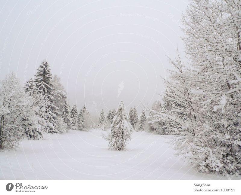 Winterlandschaft II Schnee Winterurlaub Natur Landschaft Himmel Wolken Schneefall Baum Wiese Wald Berge u. Gebirge Erholung kalt weiß Lebensfreude ruhig