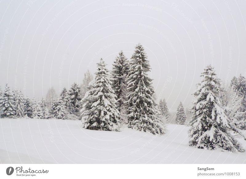 Winterlandschaft III Schnee Natur Himmel Wolken Schneefall Baum Wiese Wald Hügel Berge u. Gebirge frei kalt grün weiß Einsamkeit ruhig Winterwald Tanne