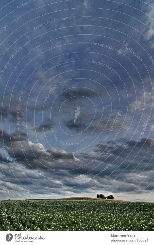 Mittelerde... Auenland Feld Nachrichten aus Mittelerde Der Herr der Ringe ungewiss Hoffnung Gras Horizont Wolken Himmel schlechtes Wetter Gewitterwolken ruhig