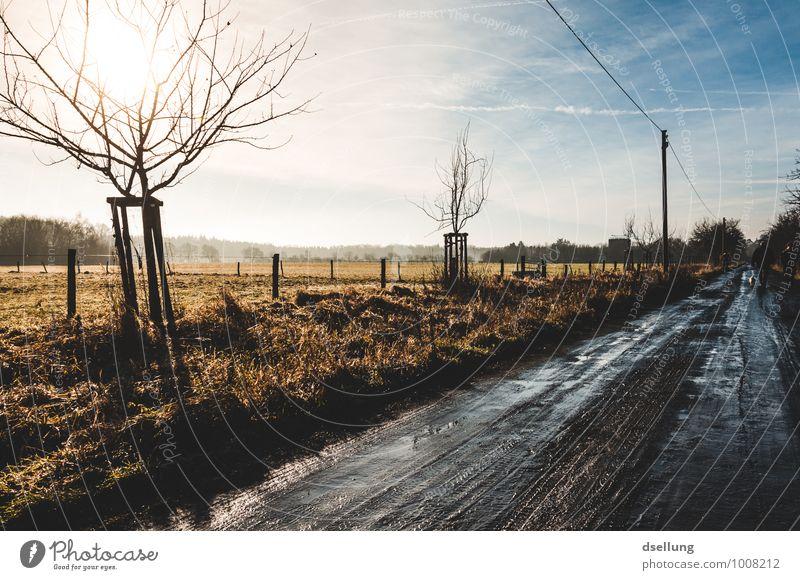Morgens.. Umwelt Natur Landschaft Himmel Wolken Sonne Sonnenaufgang Sonnenuntergang Sonnenlicht Winter Schönes Wetter Baum Feld Straße Wege & Pfade Fußweg