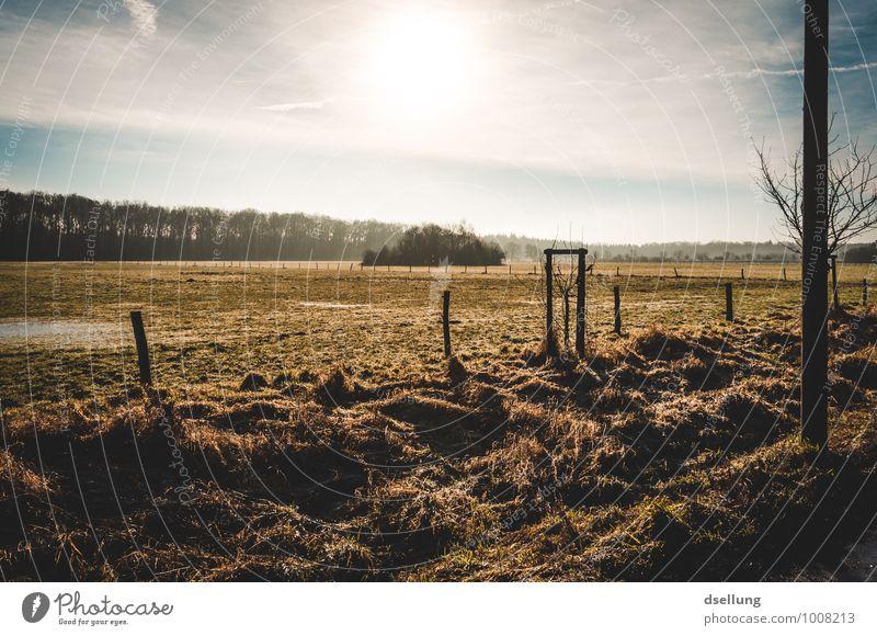 Morgens. Umwelt Natur Landschaft Himmel Wolken Sonne Sonnenaufgang Sonnenuntergang Sonnenlicht Winter Schönes Wetter Baum Feld Gesundheit kalt nass natürlich