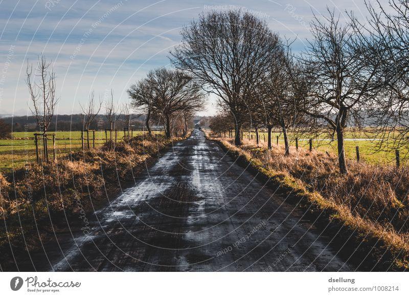 Bis an den Horizont Himmel Natur blau grün Baum Landschaft ruhig Wolken Winter schwarz kalt Umwelt gelb Wege & Pfade natürlich grau