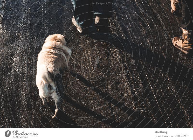 200. weiter. Mensch maskulin feminin Fuß Wege & Pfade Fußweg Tier Haustier Hund Mops 1 gehen laufen wandern dreckig Zusammensein klein nass natürlich braun grau