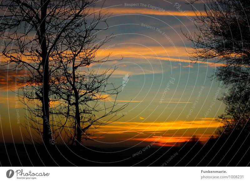 sundown Ferien & Urlaub & Reisen Sonne Landschaft Himmel Sonnenaufgang Sonnenuntergang Winter Schönes Wetter Baum Wald Glück Fröhlichkeit Lebensfreude