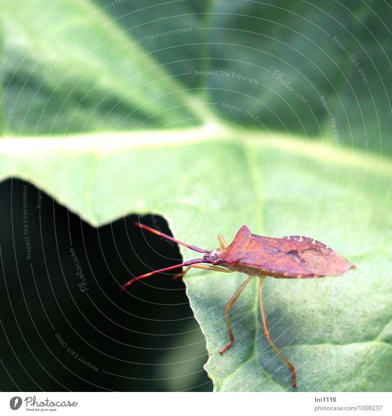 auf der Lauer Natur blau Pflanze schön grün weiß Sommer Sonne rot Blatt Tier schwarz Wald gelb Wärme Wiese