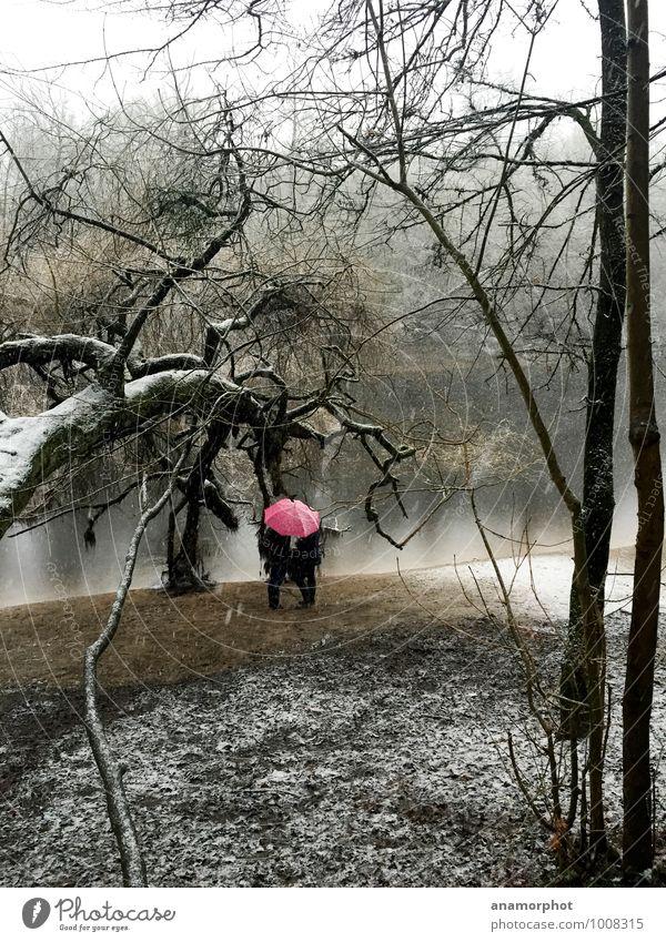 red rain Freizeit & Hobby Ausflug Winter Schnee Freundschaft Paar Jugendliche Natur Landschaft Pflanze Sand Wasser Wetter schlechtes Wetter Wind Schneefall Baum