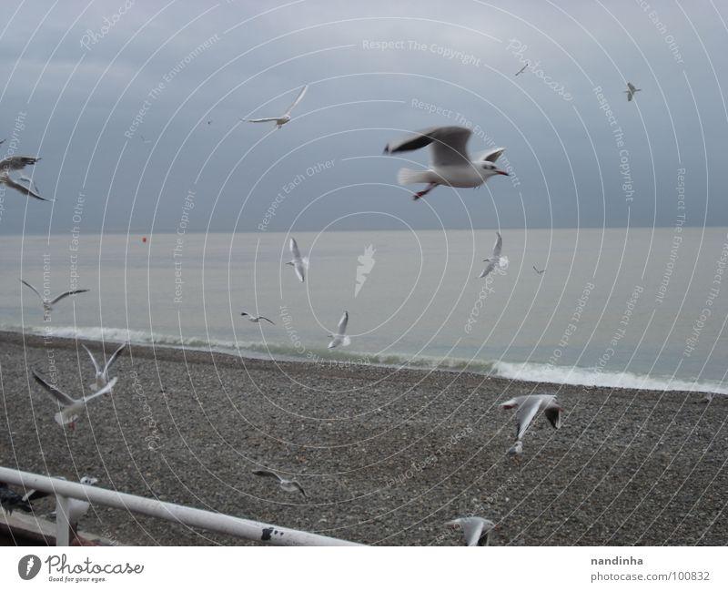 Vögel am Meer Strand Einsamkeit Freiheit grau Vogel Küste Mittelmeer