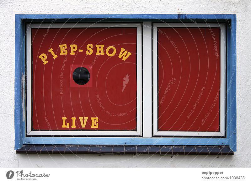 petshop Haus Arbeitsplatz Handel Zoo Gebäude Mauer Wand Fassade Fenster Schriftzeichen füttern kaufen Blick verkaufen frech Neugier verrückt gelb rot Freude