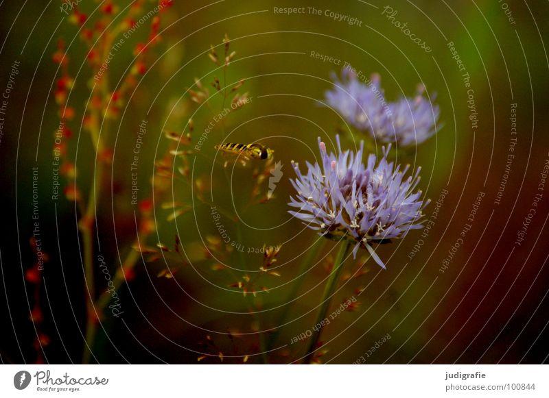 Wiese Natur schön Blume grün blau Pflanze Sommer schwarz Tier Blüte träumen braun Umwelt fliegen Wachstum