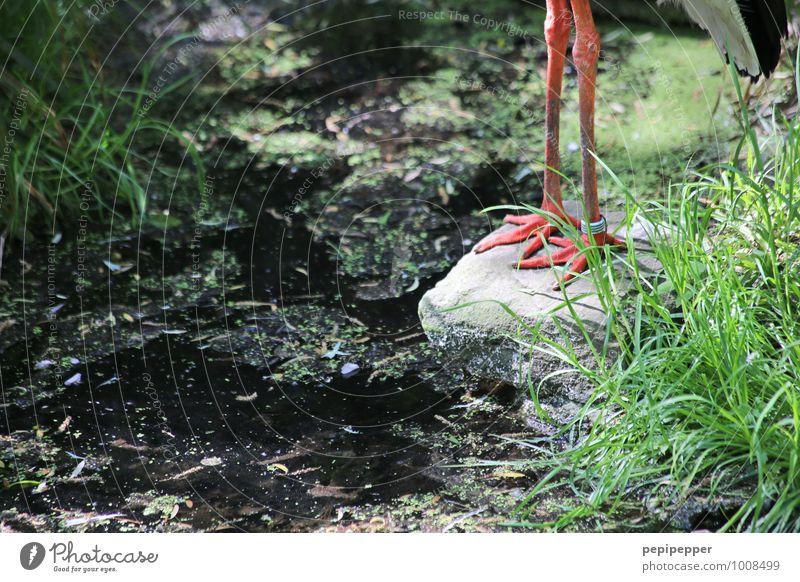 L L Pflanze grün Sommer Tier Wald Wiese Gras Stein Garten Sand Vogel Erde Wildtier stehen Moos Zoo