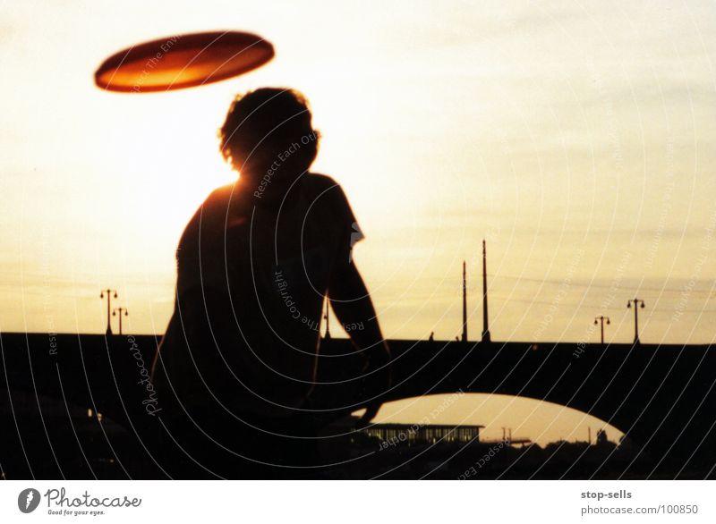 Abendgelber Elbsegler Spielen Frisbee Silhouette Dresden Aktion Jugendliche Freude werfen Fensterscheibe Brücke Elbwiese Wärme Sonne