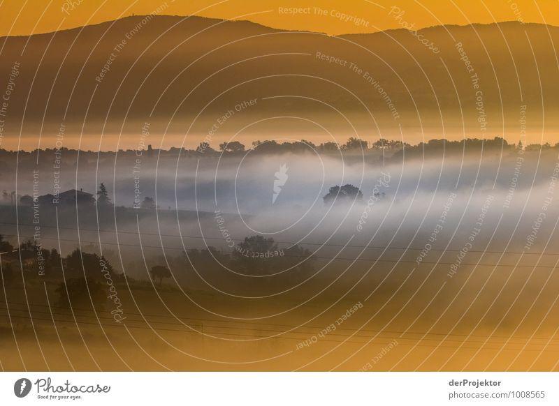 Goldener Morgen in der Toskana Natur Ferien & Urlaub & Reisen Pflanze Landschaft Freude Tier Ferne Wald Umwelt Berge u. Gebirge Gefühle Wiese Frühling Glück