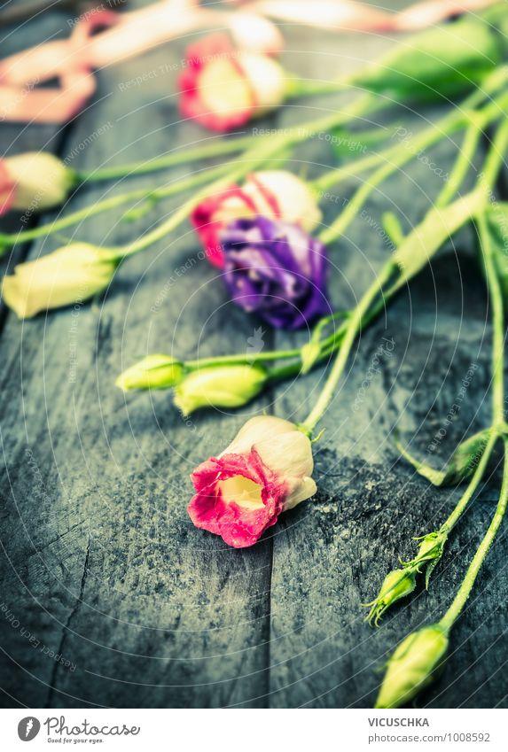 Pink und blaue garten Blumen auf dunklem Holztisch Natur blau Pflanze Sommer Blume Herbst Blüte Frühling Stil Hintergrundbild Garten rosa Lifestyle Design Geburtstag Geschenk