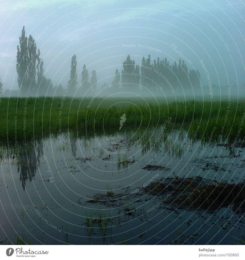 nach dem regen Handy-Kamera nass Pfütze Reflexion & Spiegelung Nebel Baum Pappeln grün Umweltschutz schön Wiese Feld Landwirtschaft Gras Regenwasser aufsteigen