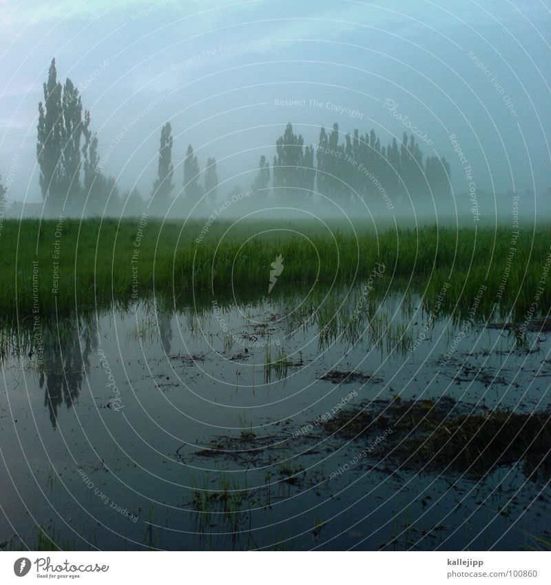 nach dem regen Natur Wasser schön Baum grün ruhig Erholung Wiese Gras Regen Feld Nebel Umwelt Wassertropfen nass Seil