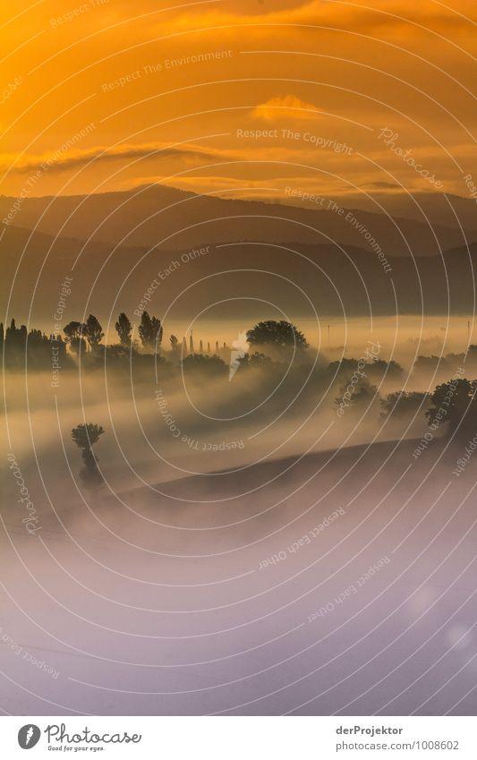 Toskana am Morgen im Nebelmeer Natur Ferien & Urlaub & Reisen Pflanze Sommer Meer Landschaft Freude Tier Ferne Berge u. Gebirge Umwelt Gefühle Wiese Freiheit