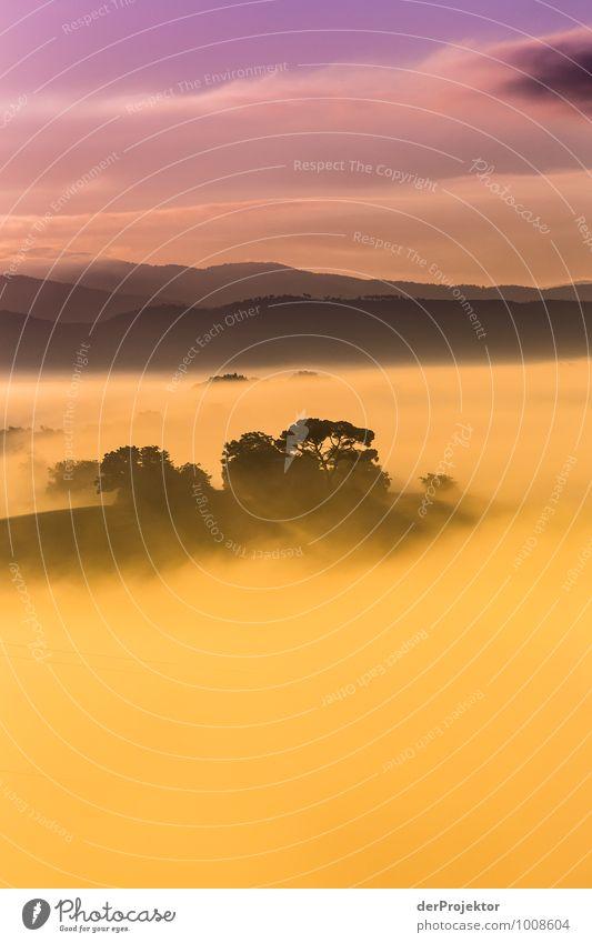 Ein wunderschöner Morgen in der Toskana Natur Ferien & Urlaub & Reisen Pflanze Sommer Baum Landschaft Wolken Freude Ferne Wald Umwelt Berge u. Gebirge Gefühle