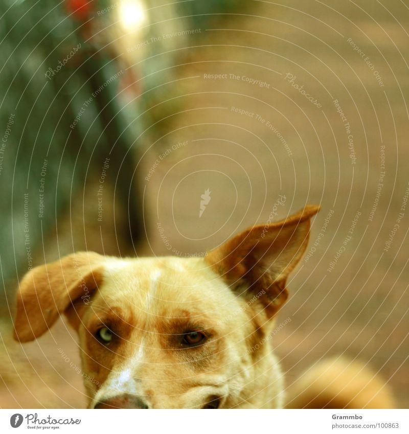 Symmetrie sucks Auge Hund Ohr Freundlichkeit grinsen Säugetier Magdeburg Tier Sachsen-Anhalt Hängeohr