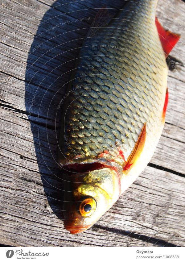 Mittagessen Fisch Ernährung Abendessen Slowfood Freizeit & Hobby Angeln Ferien & Urlaub & Reisen Natur Tier Wasser Schönes Wetter Flussufer Wildtier Totes Tier