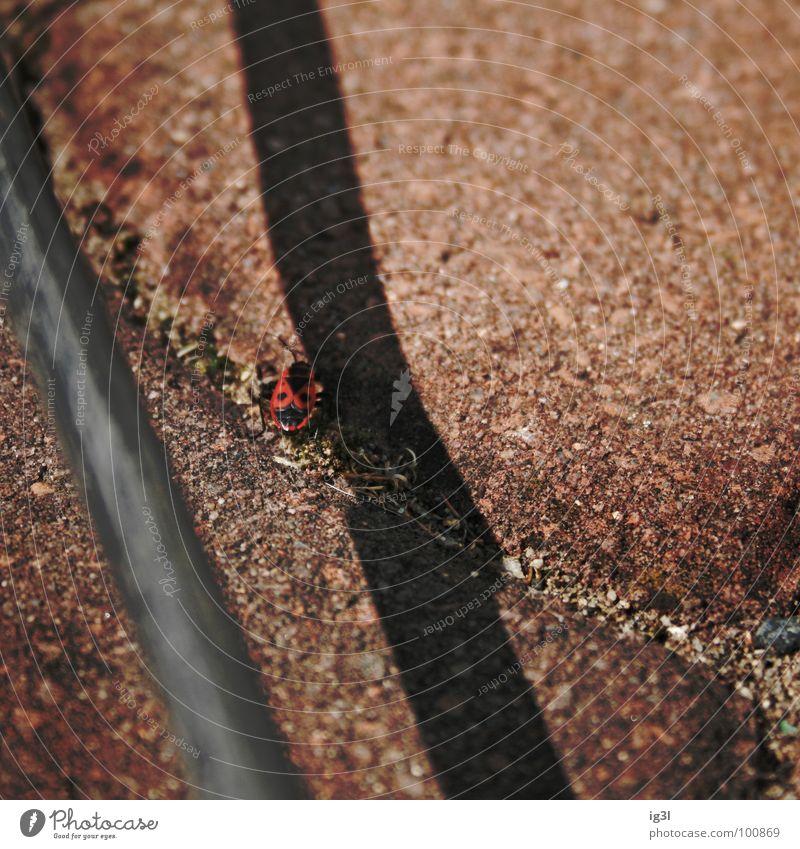 grenzgänger Ferien & Urlaub & Reisen rot Tier kalt Wärme Wege & Pfade klein Stein Beine Kraft laufen Energiewirtschaft wandern Ausflug Brand Kabel