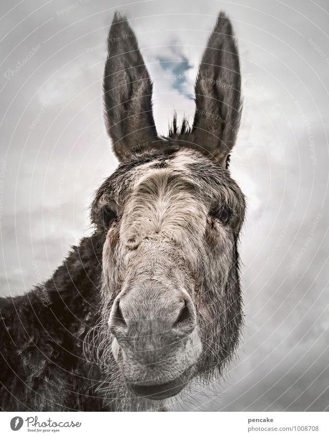 eselsgeduld Himmel Wolken Tier grau authentisch Erfolg Urelemente Freundlichkeit Zeichen Neugier Gelassenheit nah Tiergesicht Haustier frech Gewicht