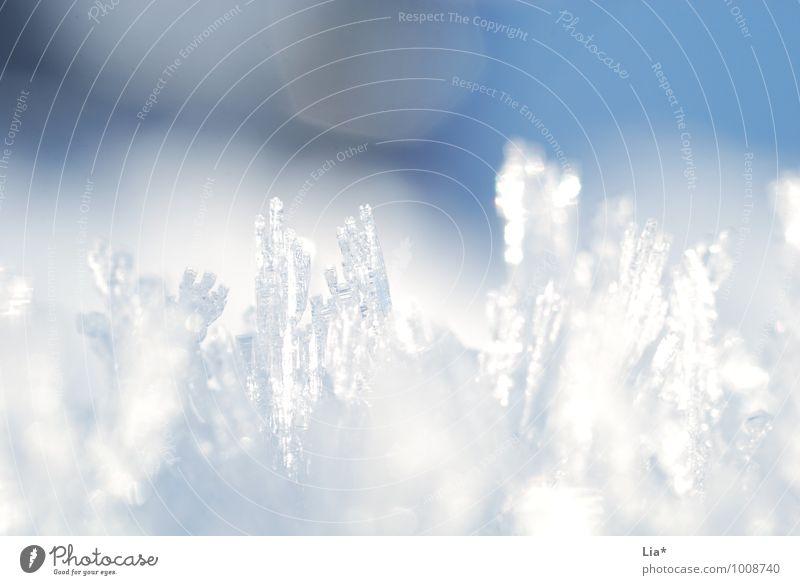 Eiskristalle Winter Frost Schnee Schneefall kalt blau weiß gefroren Lichtspiel Detailaufnahme Makroaufnahme Textfreiraum oben Textfreiraum unten