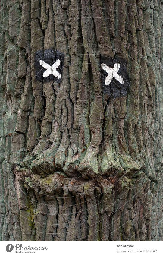 Guter Zuhörer. Natur alt grün Baum Tier Gesicht Auge Holz braun Freundschaft Schilder & Markierungen Mund Kreativität Zeichen geheimnisvoll Lippen