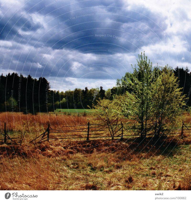Irgendwo Himmel Natur alt Pflanze Baum Landschaft Wolken Wald Umwelt Frühling Gras Deutschland hell Horizont Wetter Idylle