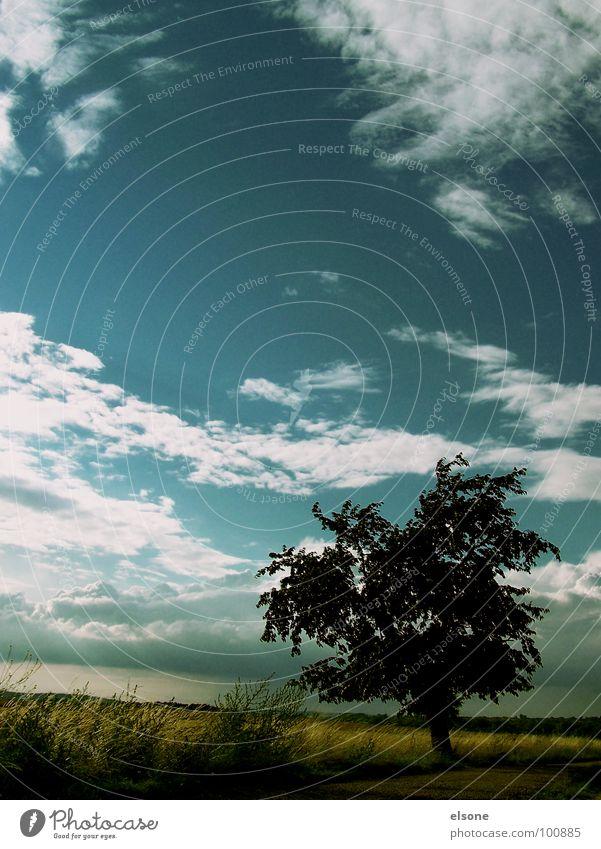 die ruhe vor dem sturm Baum Feld Wolken grün ruhig Stimmung schön Riesa Dresden Sommer Stein Mineralien Kirschbaum siluette siluetta Natur Freiheit blau