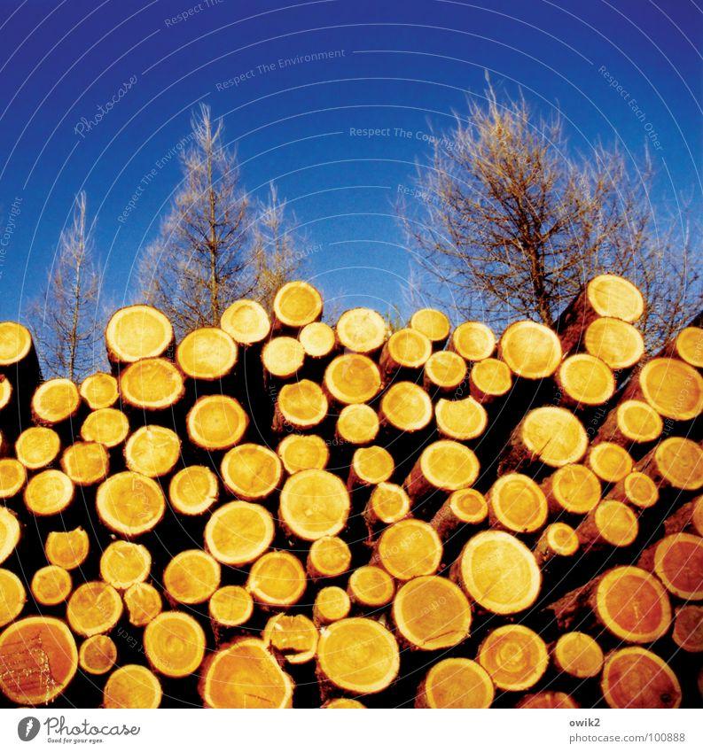 Parce mihi Domine Arbeit & Erwerbstätigkeit Beruf Landwirtschaft Forstwirtschaft Umwelt Natur Wolkenloser Himmel Winter Schönes Wetter Baum Wald Holz blau gelb