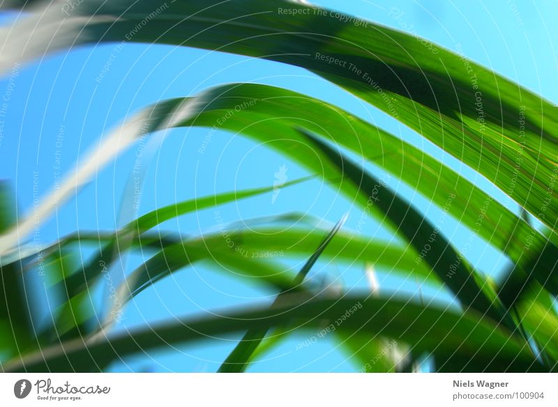 Mr. Wurms Tunnelblick Gras Wolken grün Unschärfe Sommer Himmel Bodenbelag Erde blau Kontrast Wind