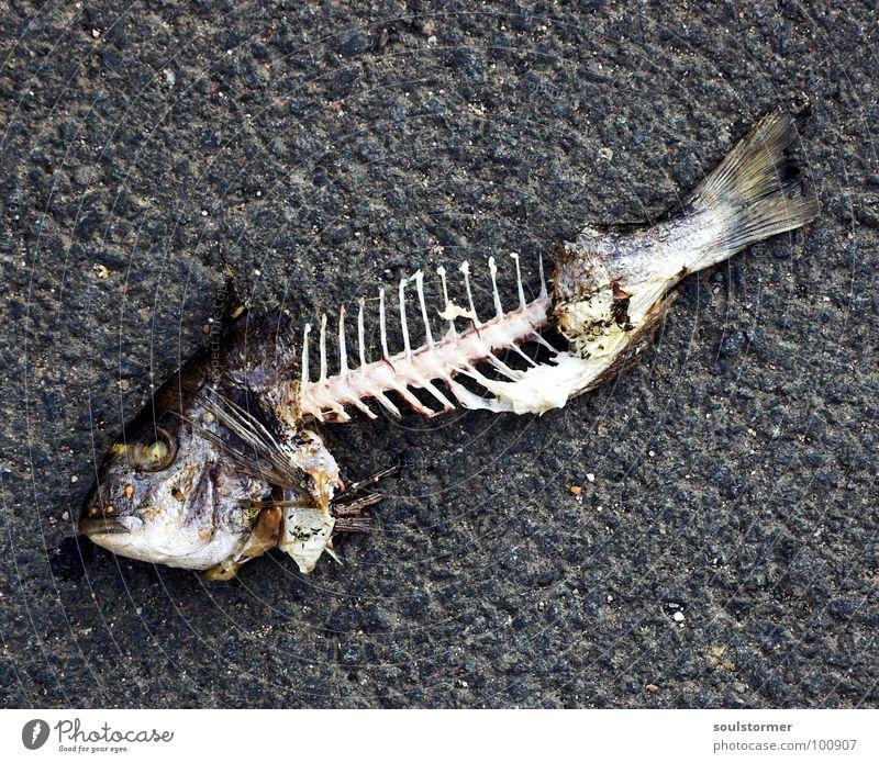 Gräten Wasser weiß Sommer Tier Auge Tod grau lustig Lebensmittel dreckig Mund Ernährung Fisch Vergänglichkeit atmen obskur