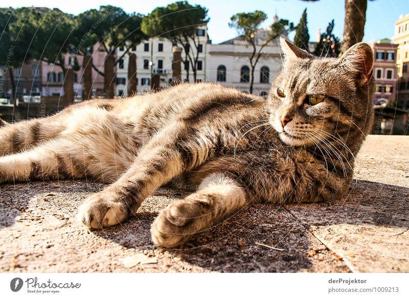 Relaxen in Rom Freizeit & Hobby Ferien & Urlaub & Reisen Tourismus Ausflug Abenteuer Sightseeing Städtereise Sommerurlaub Architektur Umwelt Tier Urelemente