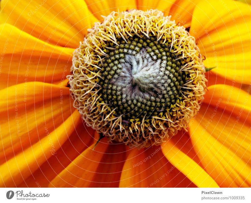 Blume Natur Pflanze schön Farbe Sommer Landschaft gelb Gefühle Wiese Blüte Stil Garten Park träumen Feld