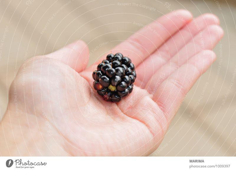 to pick blackberries, one berry in the hand Natur Hand schwarz Umwelt Lebensmittel Frucht frisch Ernährung lecker Ernte Beeren reif Vegetarische Ernährung roh Zutaten Blaubeeren