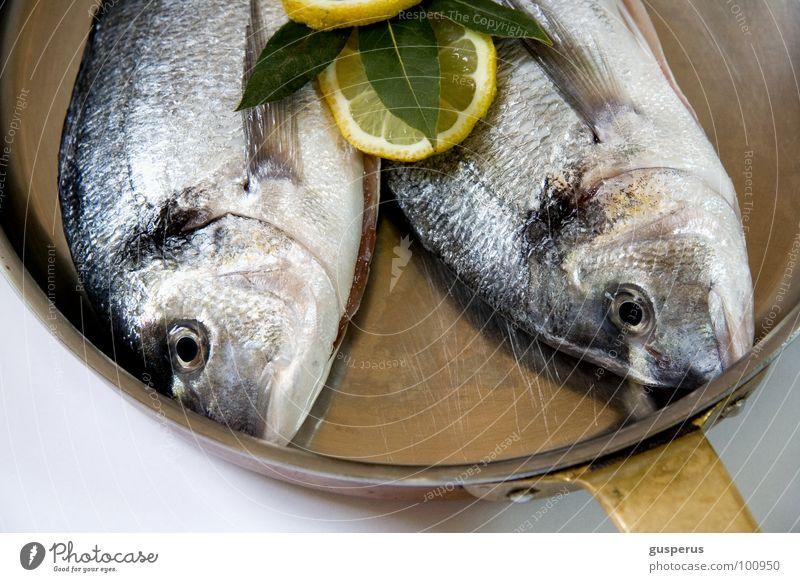 {geschwisterliebe} lecker nehmen geben schön feucht Glätte gleiten frisch Schwanz Dorade Ernährung Gastronomie Haut Speise eiweis aus dem meer seafood Fisch
