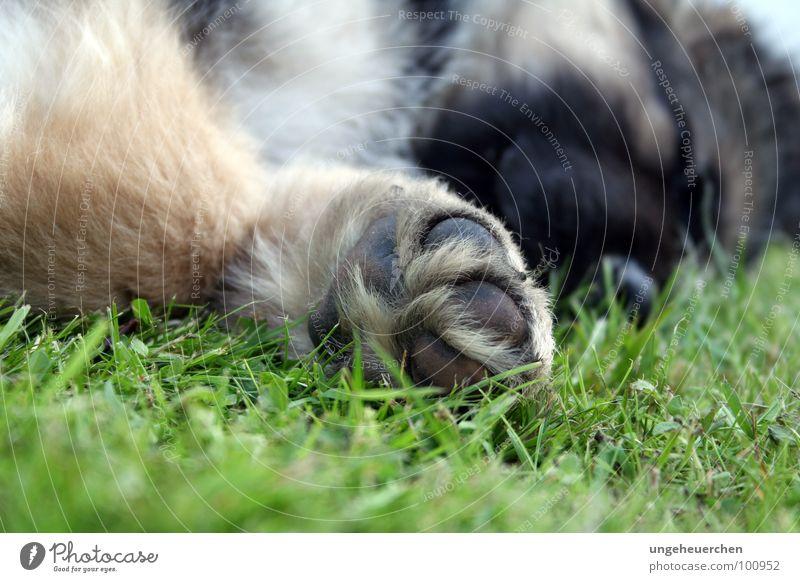 Freund auf vier Pfoten grün Freude schwarz Erholung Gras Stil träumen Hund klein Fuß Freundschaft braun liegen schlafen niedlich Fell