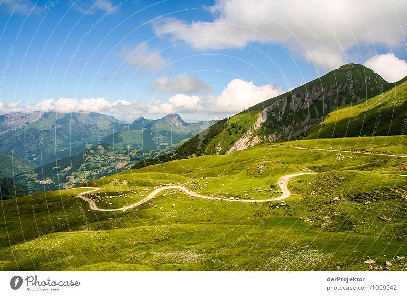 Kühe können so klein wirken Natur Ferien & Urlaub & Reisen Pflanze Sommer Landschaft Tier Ferne Umwelt Berge u. Gebirge Wiese Wege & Pfade Glück Felsen