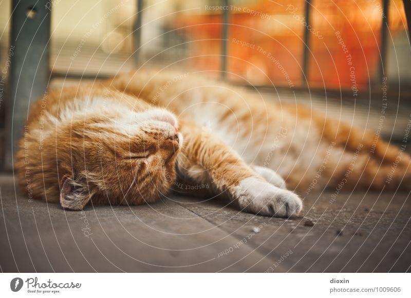 Los jetzt, kraul mich! Tier Haustier Katze Fell 1 Erholung liegen schlafen kuschlig Zufriedenheit Lebensfreude ruhig Farbfoto Außenaufnahme Menschenleer Tag