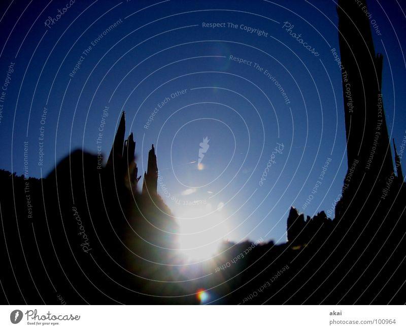 Lichterspiel am Schauinsland 2 Sturm Spinne Spinnennetz Baum Ruine Sonnenlicht himmelblau Schwarzwald Baumstamm Orkan Spinngewebe Reflexion & Spiegelung