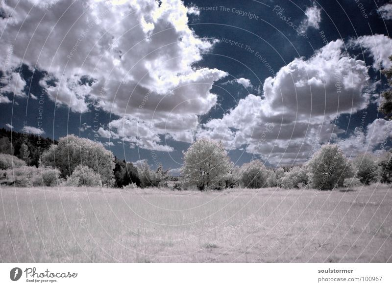 unglaublich... Infrarotaufnahme weiß Farbinfrarot Personenzug schwarz Wolken Gras Wegrand Wiese Holzmehl Wood-Effekt traumhaft außergewöhnlich träumen Zaun Baum