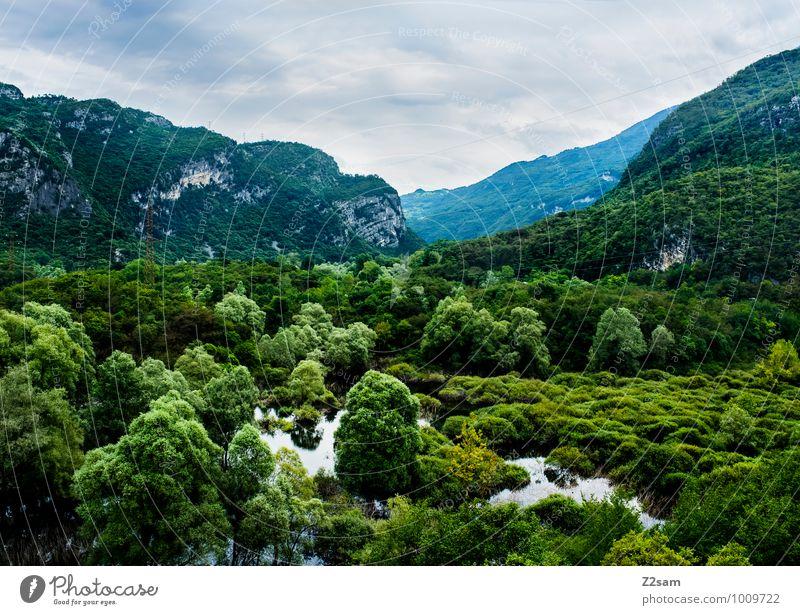 Biotop am Gardasee Himmel Natur Pflanze grün Wasser Baum Landschaft Wolken Wald Umwelt Berge u. Gebirge natürlich Gesundheit See Sträucher frisch